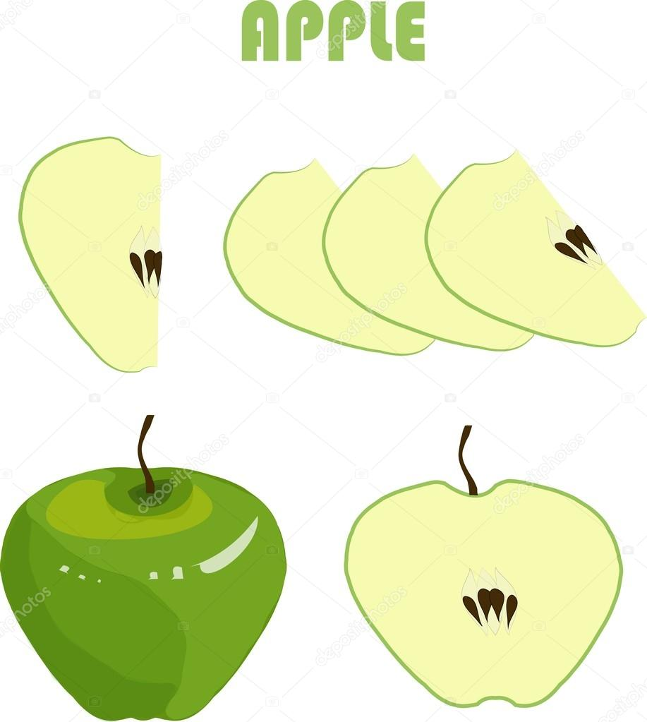 green apple fruit drawing. green apple, brown roots, slices on white background, hand drawing, painting. healthy eating, fruit, organic, packaging design, product packaging, apple fruit drawing