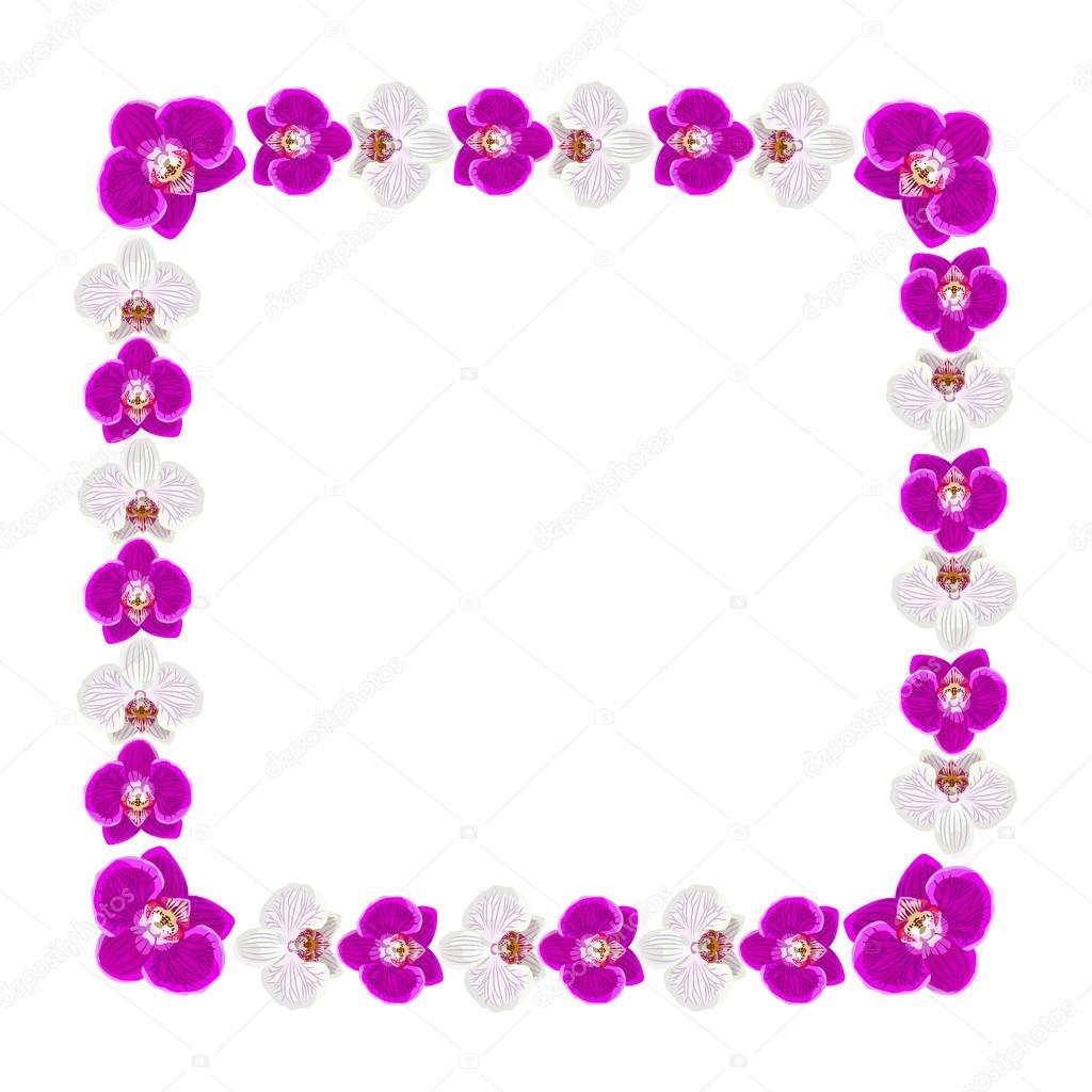 Marco de hermosas flores de orquídeas — Archivo Imágenes Vectoriales ...
