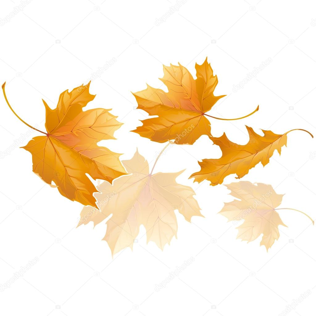 Resultado de imagen para hojas otoño viento