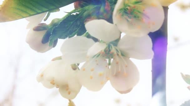 Nejkrásnější obrazy přírody jarní den
