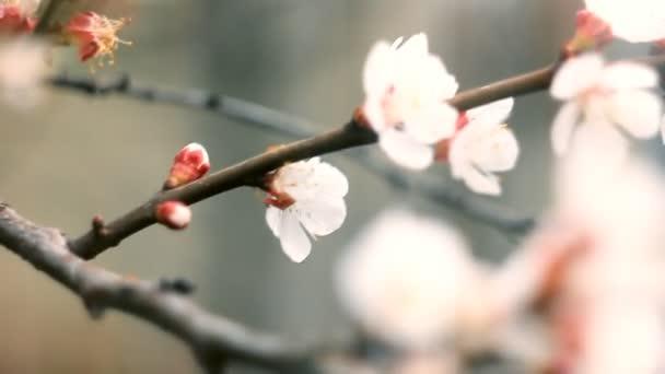 Bílý květ na slunný jarní den