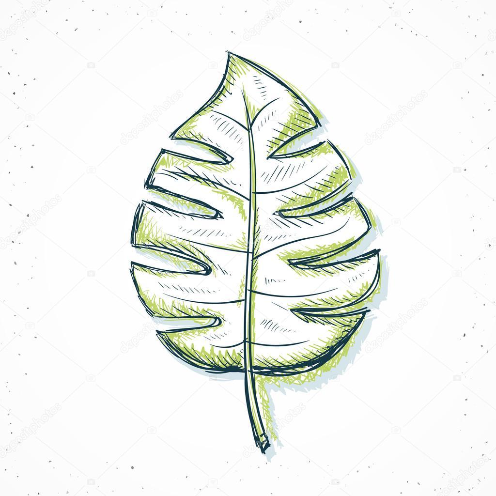 Folha De Palmeira Isolado Feito à Mão Em Estilo De Desenho