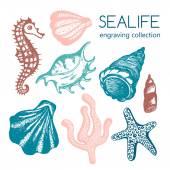 Fotografie Meer-Sammlung mit Muscheln, Seesterne, Korallen, Seepferdchen. Hand gezeichneten Muschel Marine Gravur isoliert auf weiß