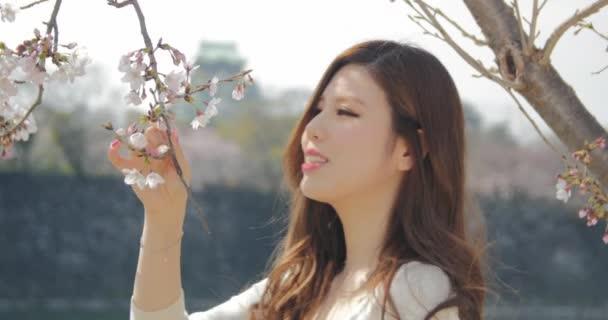 Beautiful Japanese young women smells the cherry blossoms sakura at Osaka castle park 4K