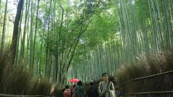 Berühmte Bambuswaldes Zeitraffer