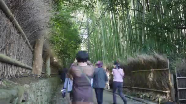 Time-lapse of Japanese Bamboo forest