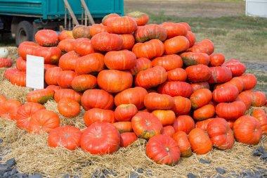 Big pile of pumpkins on hay
