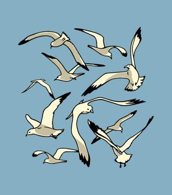 Sea gulls illustration