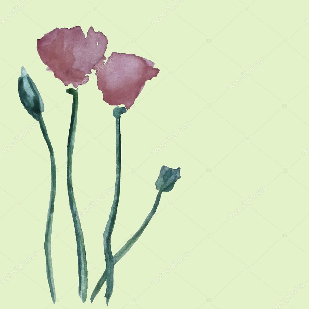 Poppies illustration card