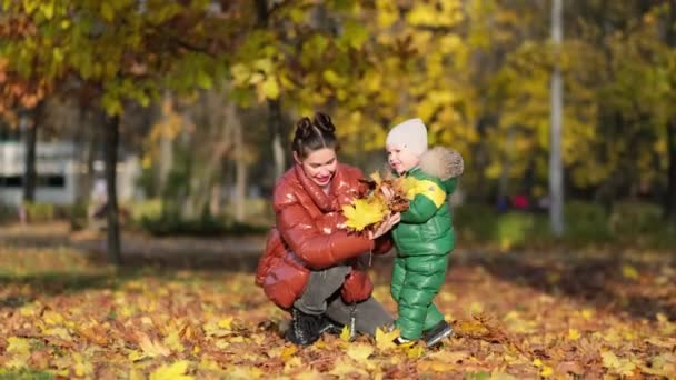 4k footage of little boy with mother collecting and picking golden autumn leaves at park slow motion shot.