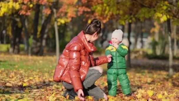 4k záběry malého chlapce s matkou sbírání a sběr zlaté podzimní listí v parku zpomalený záběr.