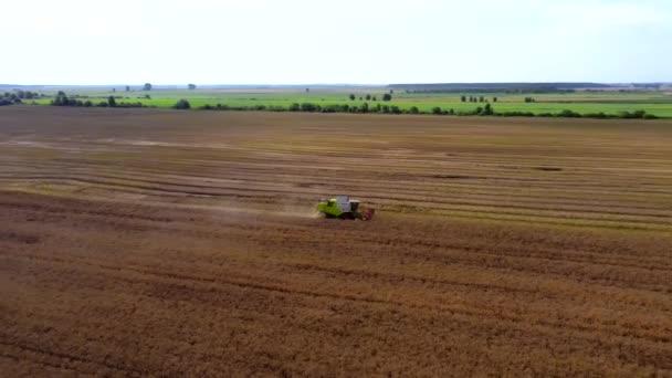 Nyáron búza betakarítása. Két betakarító dolgozik a terepen. Kombinálja a betakarító mezőgazdasági gép gyűjtése arany érett búza a területen. Kilátás felülről