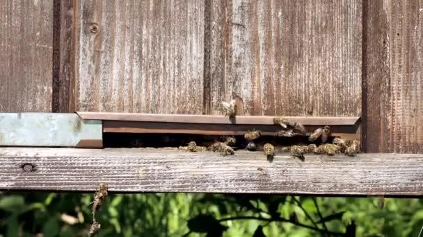 Eine Nahaufnahme der Arbeitsbienen, die Blütenpollen in den Stock auf den Pfoten bringen. Honig ist ein Imkerprodukt. Bienenhonig wird in schönen gelben Waben gesammelt