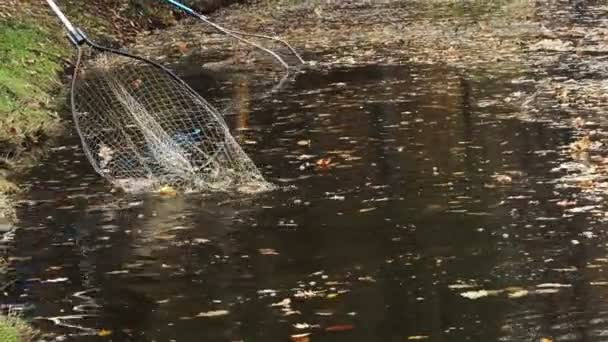 Worker cleaning lake at the park. leaning the lake with a net from the leaves.