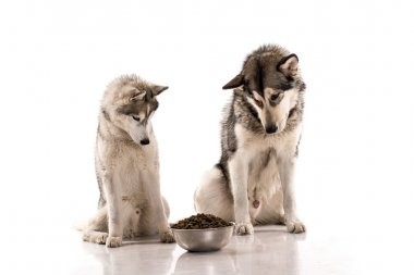 Cute dogs and their favorite dry food on a white background