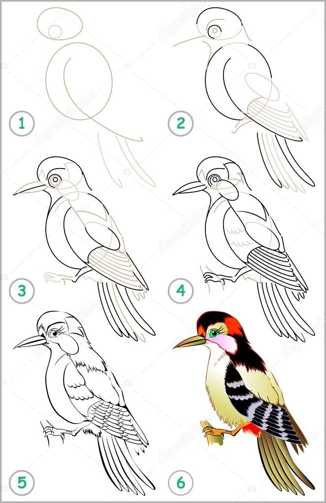 Page Shows How To Learn Step By Step To Draw A Woodpecker Stock