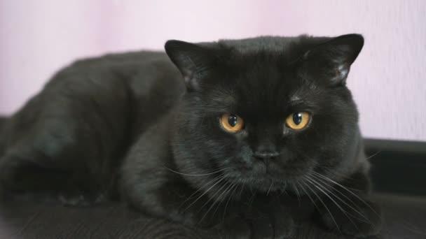 pěkná černá kočička videa