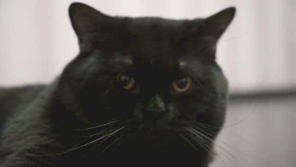 noir chatte lécher fermer