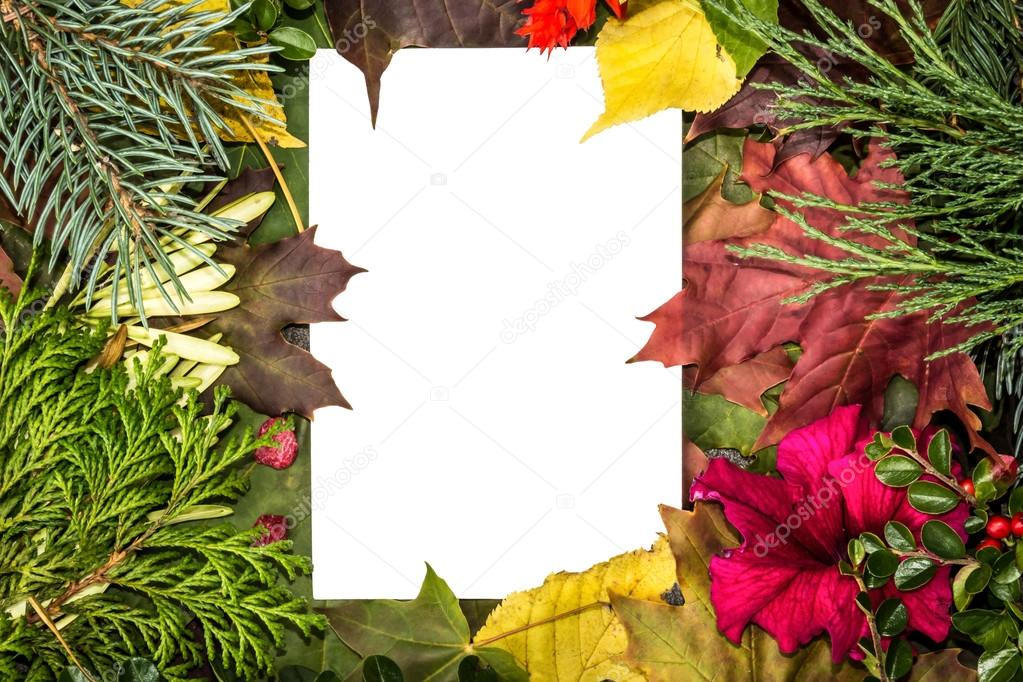 Empty white card. Fallen leaves and branches of Christmas trees. White background isolated flowers