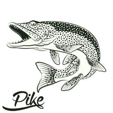 Jumping Pike isolated