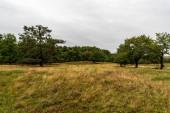 Havranické vresoviště s trávou a stromy v Národním parku Podyji v České republice u hranic s Rakouskem během oblačného podzimního dne