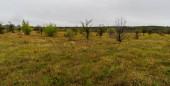 Havranická vresovistní vřesoviště v Národním parku Podyji v České republice u hranic s Rakouskem pokrytá loukami s menšími stromy a keři během oblačného podzimního dne