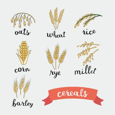 Ripe ears of cereals lettering names in English