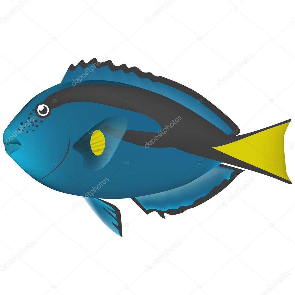real fish sea life illustration