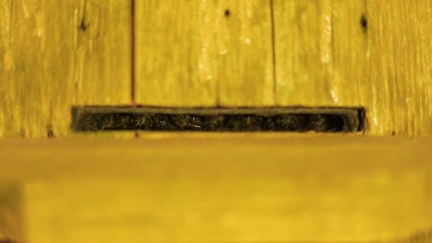 Včelí stráž střeží vchod do úlu v noci