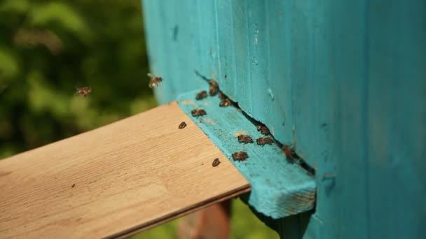 Včely létají v a vyletěla z modré úlu.