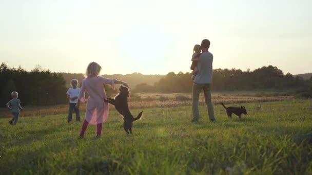 Glückliche Familienspaziergänge im Feld bei Sonnenuntergang mit Hunden.