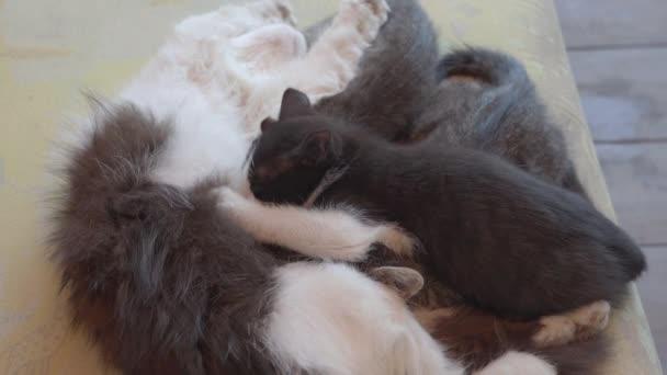 Země kočka krmí koťata na gauči.
