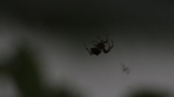 spindel väver en webb av