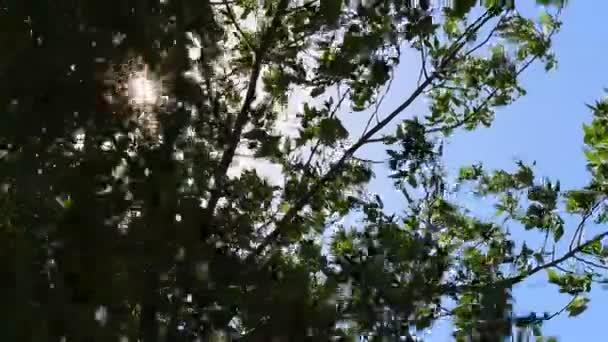 Sluneční paprsky přes listy