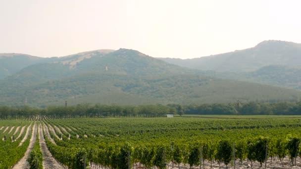 Hroznové Wineland krajiny krajiny pozadí kopců s horskou kulisou
