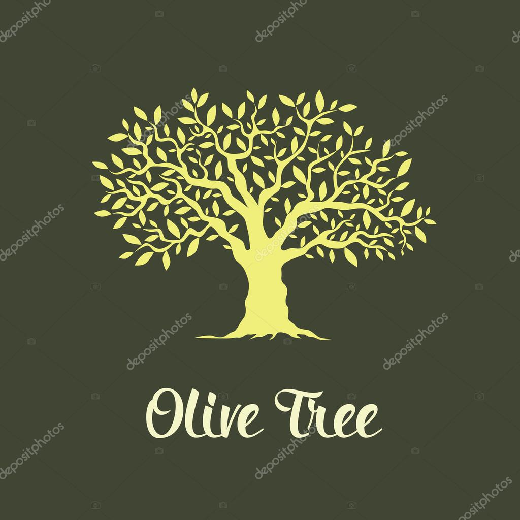 Beautiful magnificent olive tree