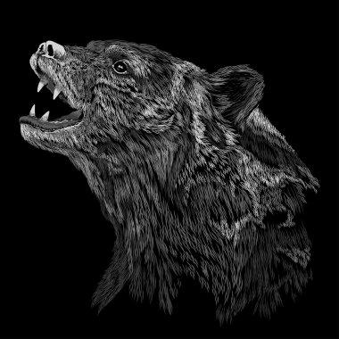 Head of Black Bear