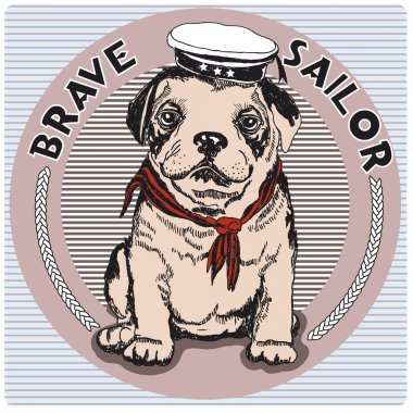 Bull Terrier breed in cap