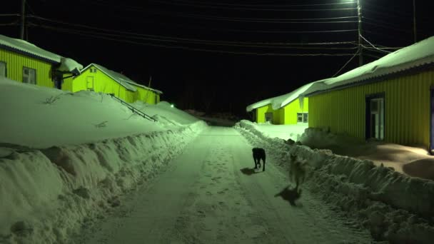 noční slavnosti toulavých psů černé a bílé barvy vymazán sníh z ulice mezi domy s žlutým posun tábor