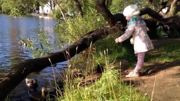 Kind füttert Enten auf dem See im Stehen vor der Kamera