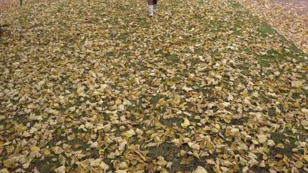 catwalk model for Yellow fallen leaves in Boots