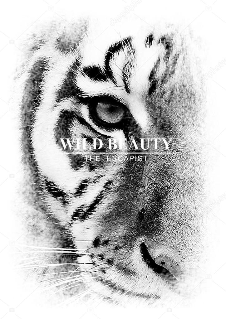 LARGE STUNNING TIGER DRAWING  PRINT B PICTURE