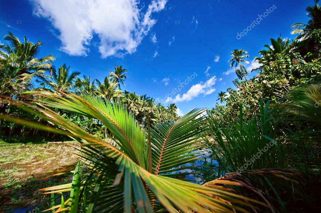 palm trees foliage
