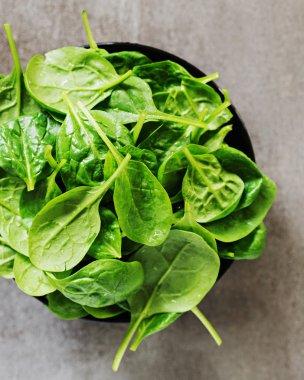 green Fresh Spinach