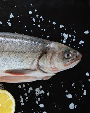 Fresh Trout fish