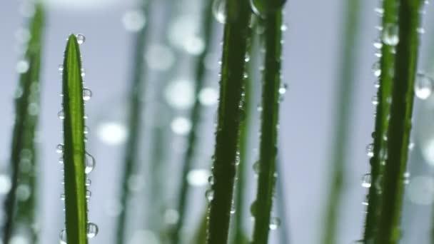 zelené trávě v dešti