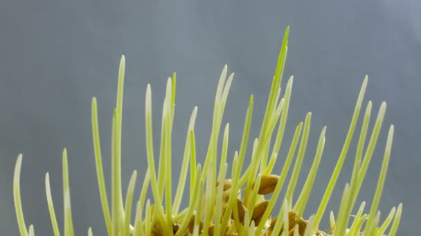 zöld növények termesztése