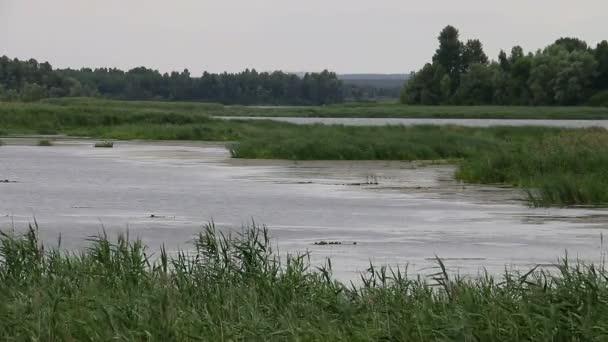 Přírodní krajina na řece
