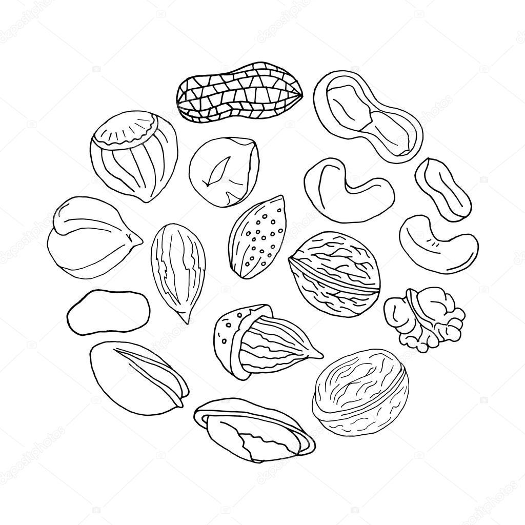 Walnut set. Walnut collection. Nuts set. Walnut set. Walnut collection. Walnut design. Walnut  art. Walnut objects. Walnut isolated. Walnut  background. Walnut  food. Walnut vintage. Walnut vector. Walnut  illustration. Walnut  art
