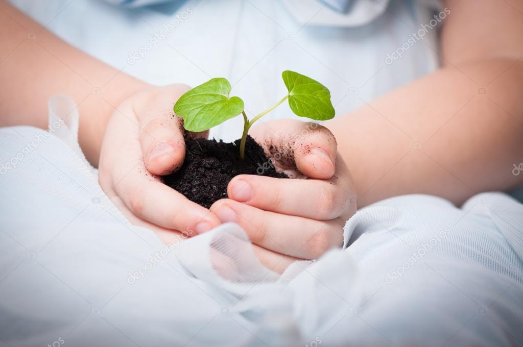 Young plant in baby girl's hands